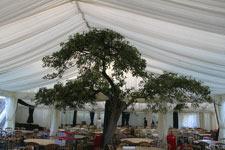 Wild Affair - in a BIG tent