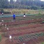 A school farm teaches children new skills and brings income to the school